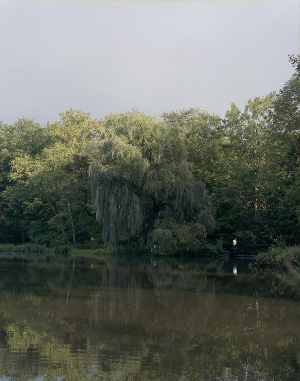 man and willow, Poughkeepsie NY 2017