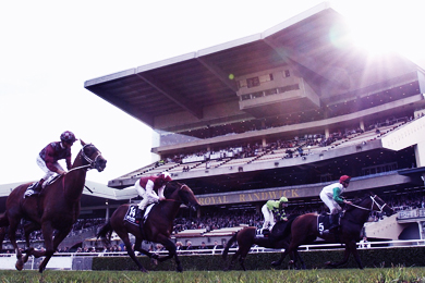 MELBOURNE CUP DAY - ROYAL RANDWICK