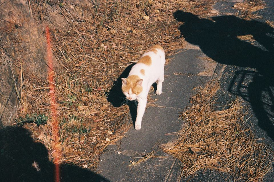 路旁散步的小貓