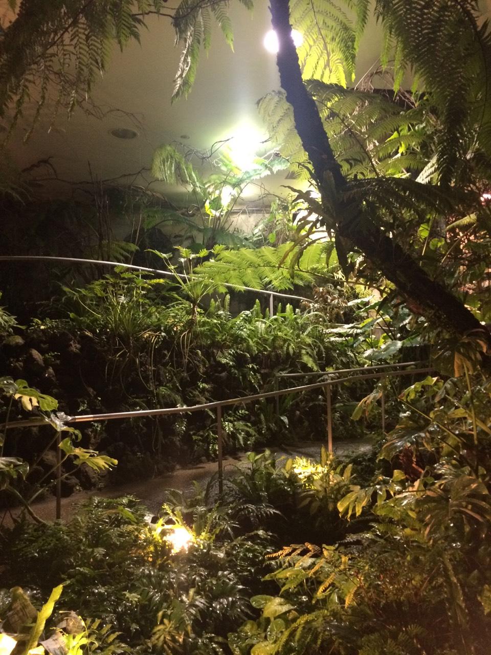 內部熱帶雨林區