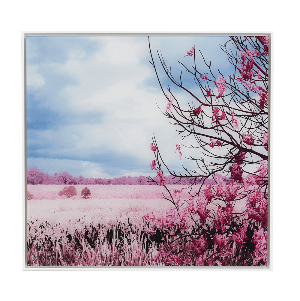 Pink Meadow