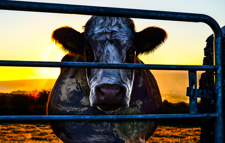 Resultado de imagen para cowspiracy