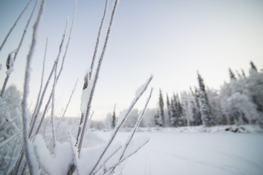 20141227-Alaska-001-11.jpg
