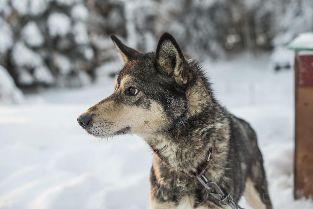 20141227-Alaska-001-9.jpg