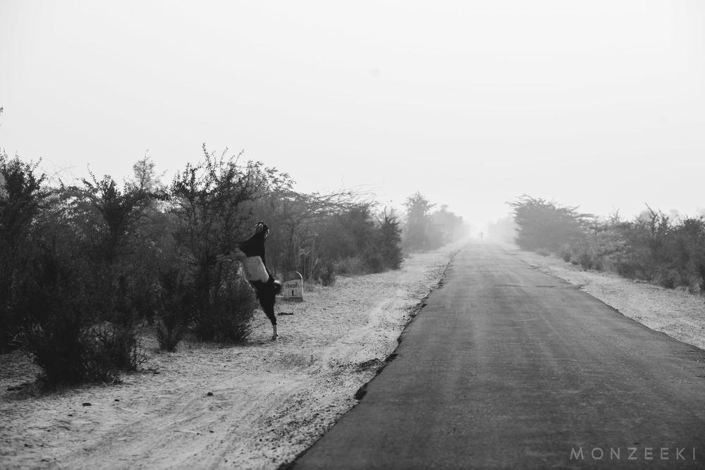 20150113-India-Jodhpur-2376.jpg