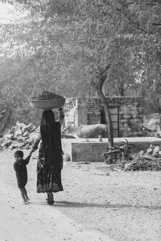20150113-India-Jodhpur-2521.jpg