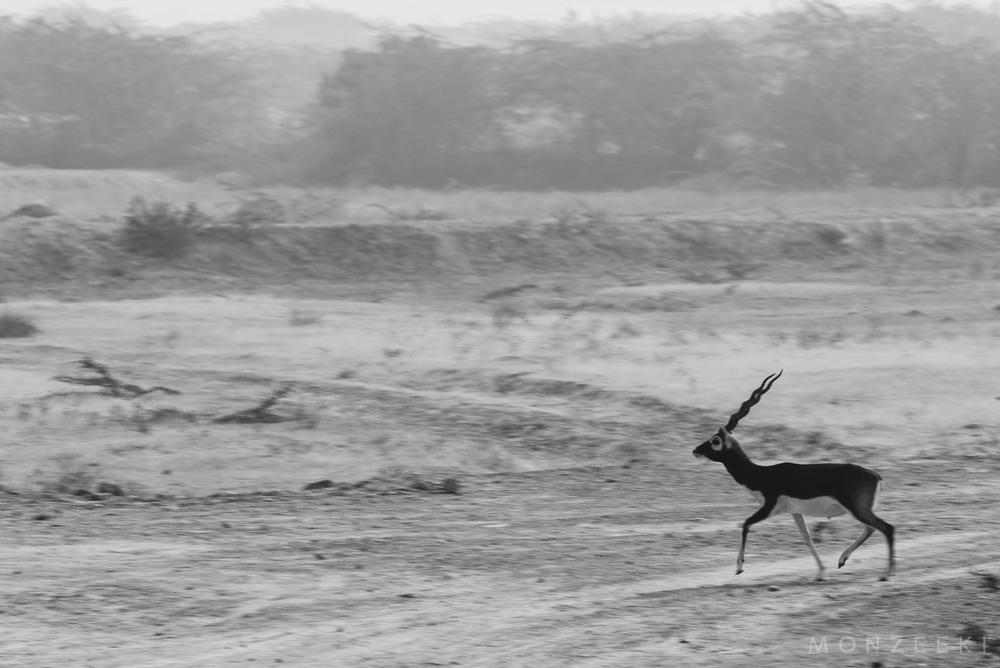 20150113-India-Jodhpur-2504.jpg