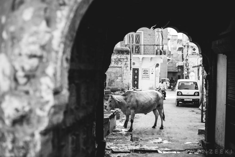 20150114-India-Jodhpur-2735.jpg