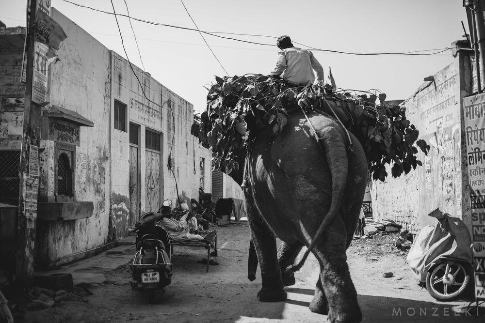 20150118-India-Jodhpur-4660.jpg