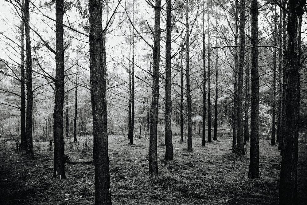 Woods 6663087791.jpg