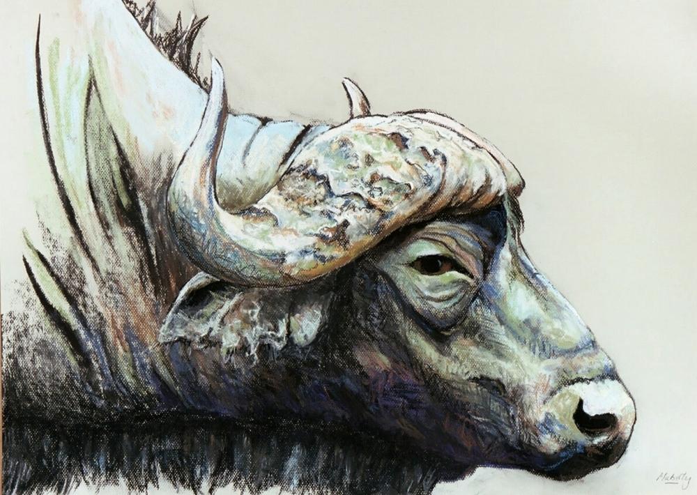 Wary buffalo