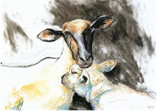 Lamb and shorn ewe