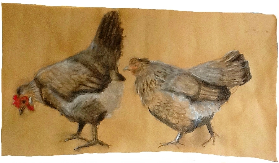 Chickens.a.Frances.H.8.15.JPG