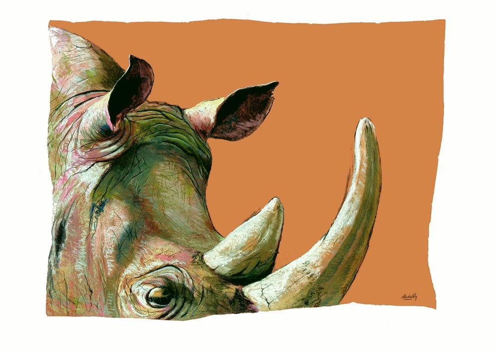 Rhino.refined.b.large.website.6.17.jpg
