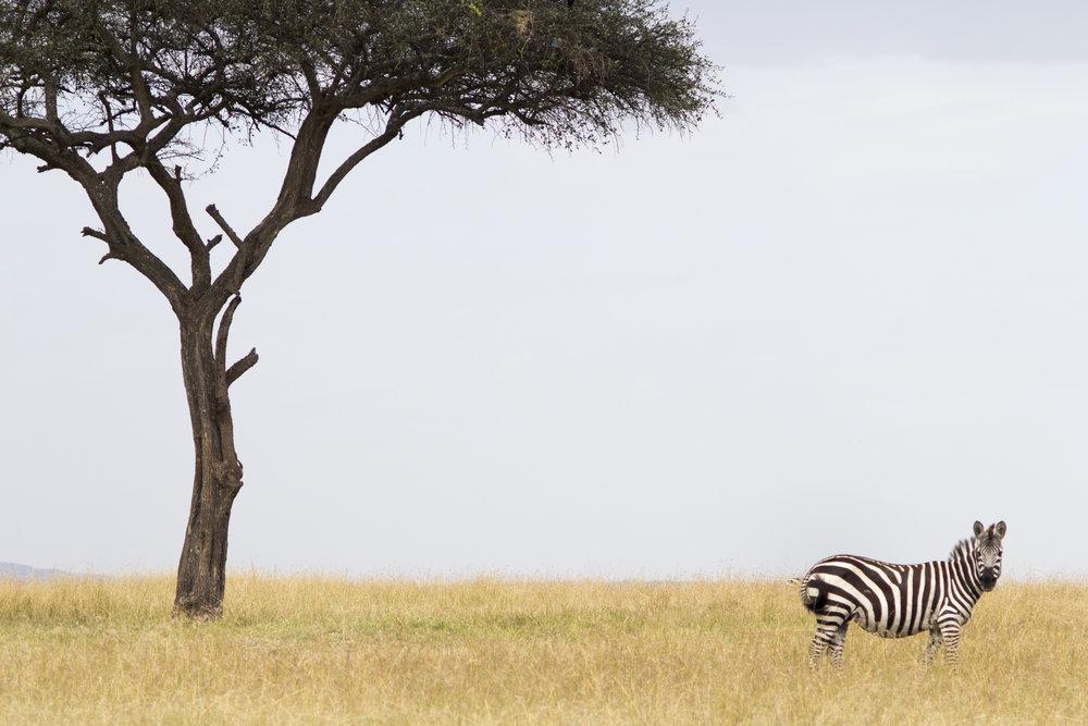SPEKE'S CAMP, KENYA -