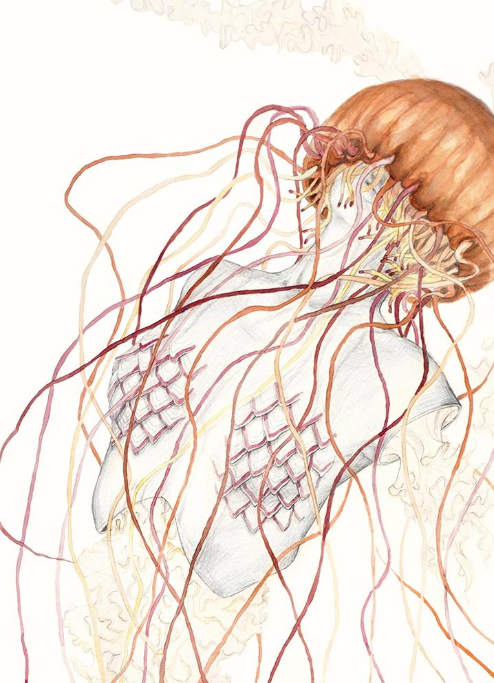 Jellyfish Vdd2.jpg