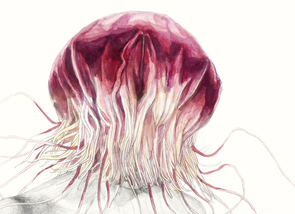 jellyfisd2.jpg