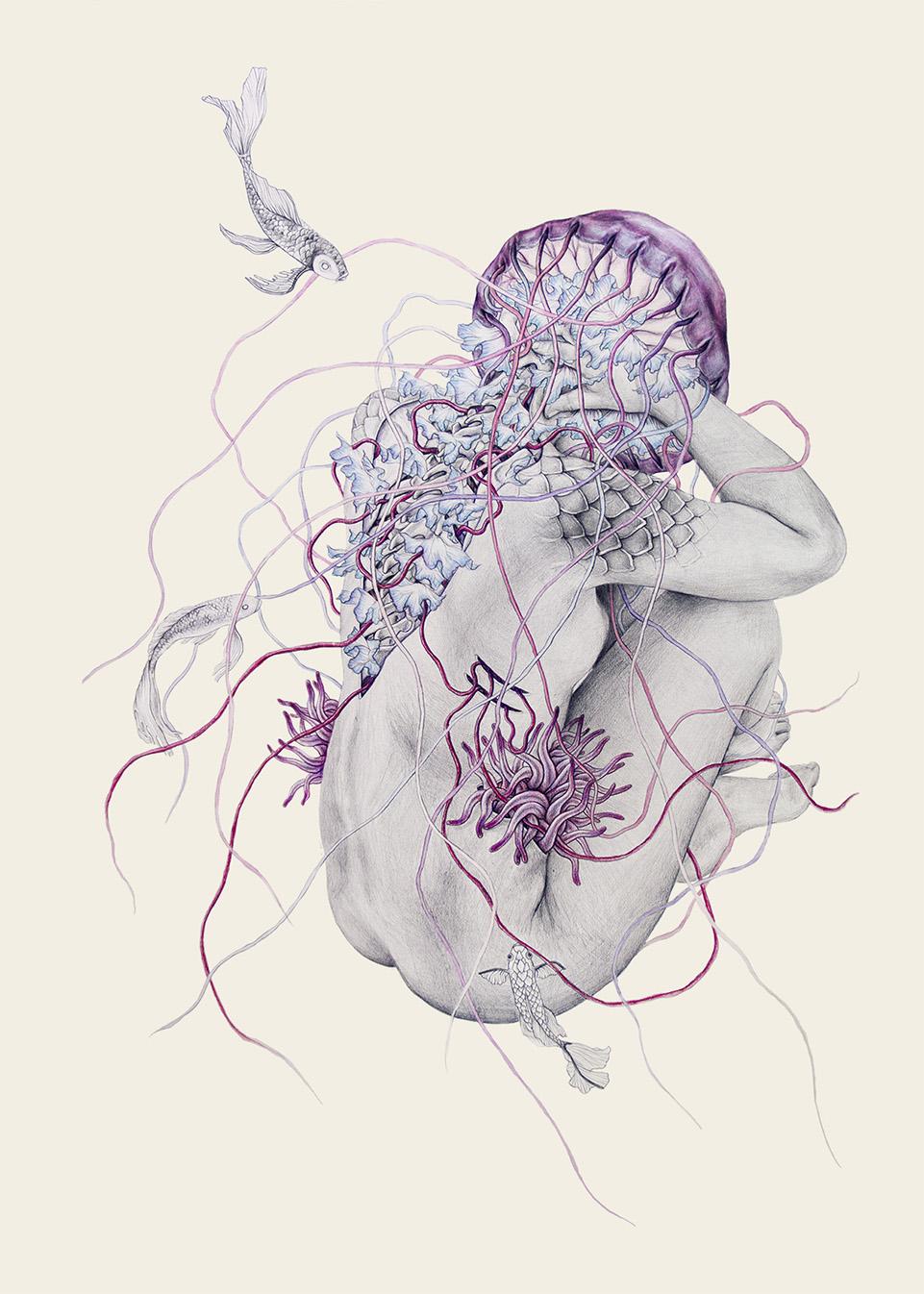 elisaancori_jellyfish7.jpg
