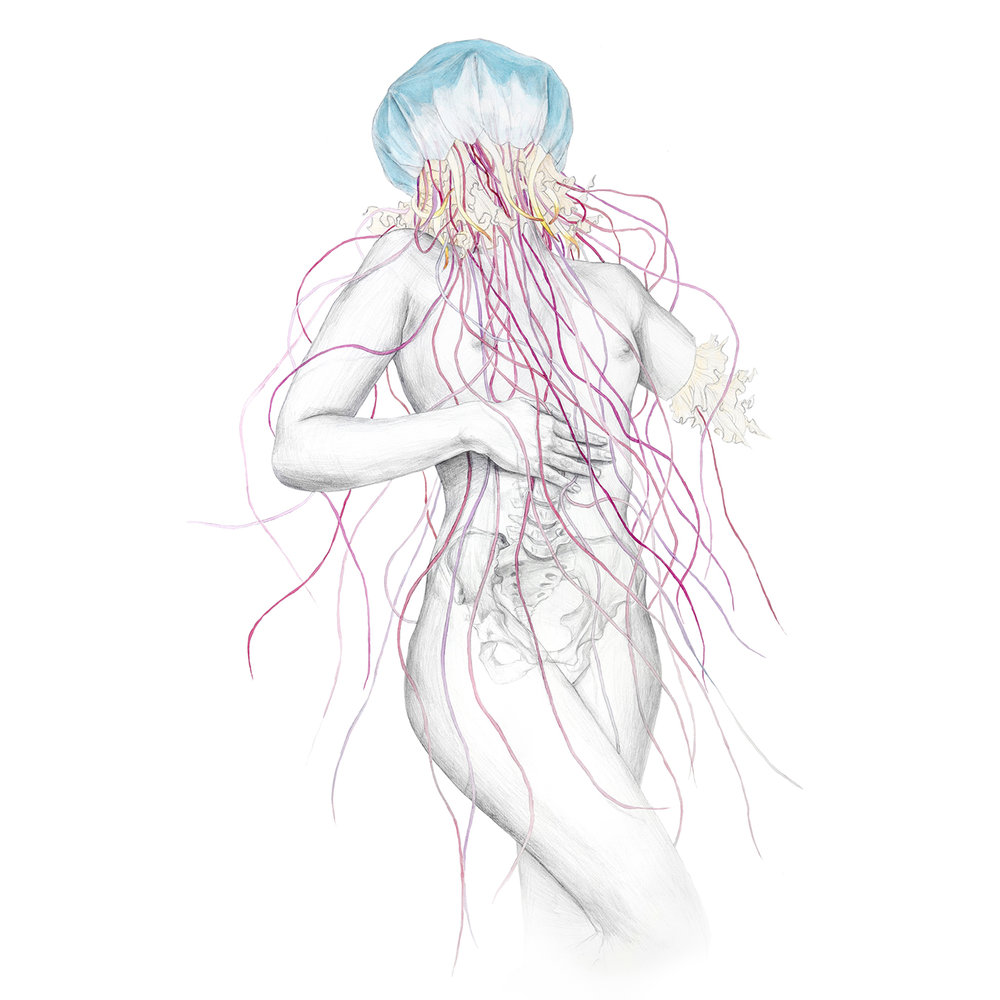 Jellyfish Vi_web.jpg