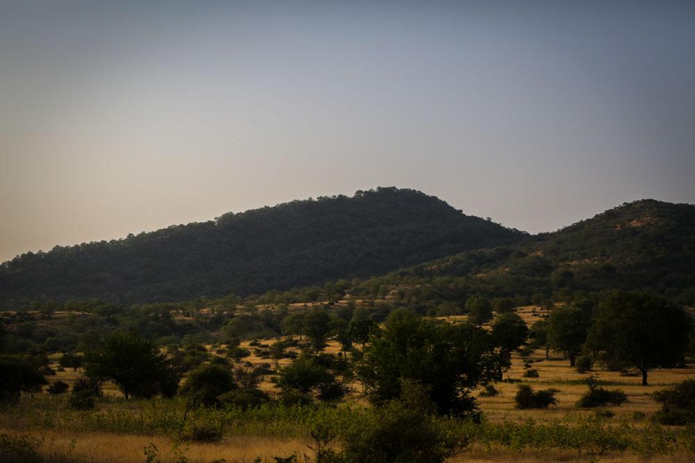 Ranthambore-2.jpg
