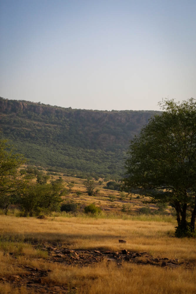 Ranthambore-7.jpg