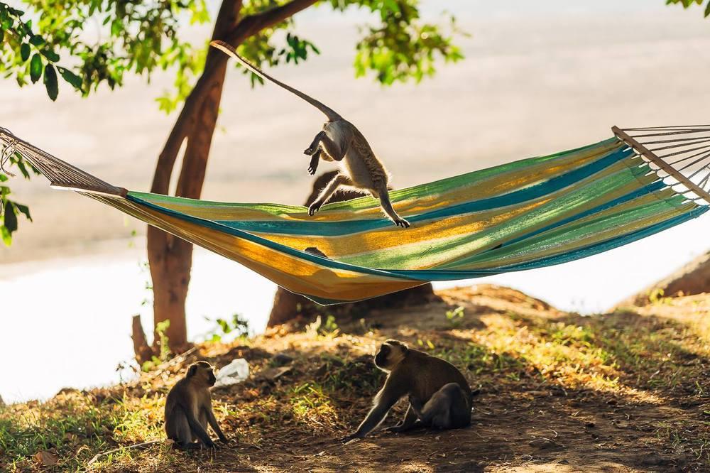 Brian monkeys.jpg