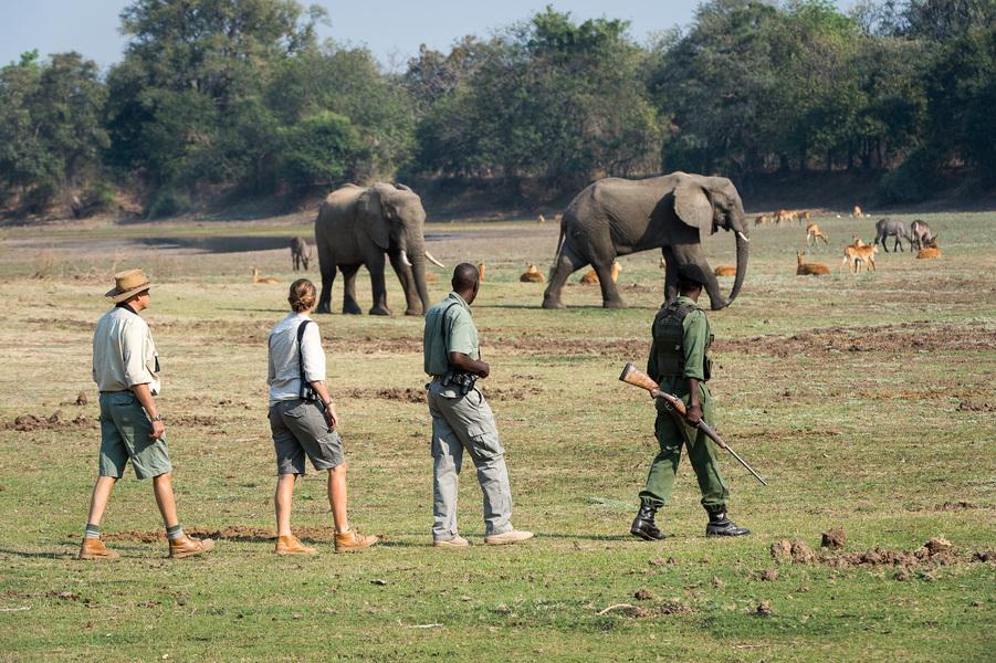 Tena Tena Walking SAfari.jpg