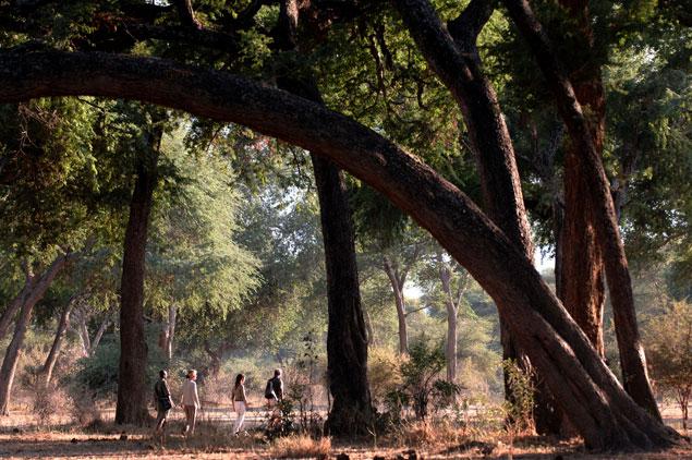 chonwe walking safari.jpg