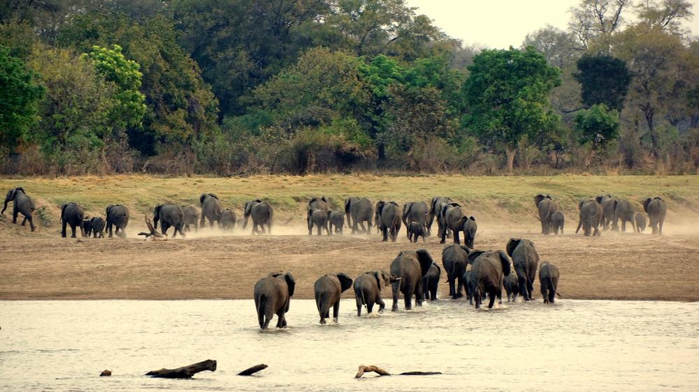 Elephants crossing.JPG