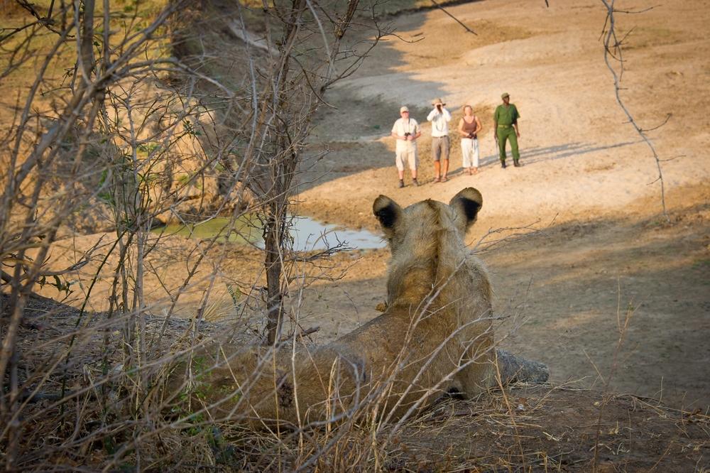 LC 2012 - Walking Safari02.jpg