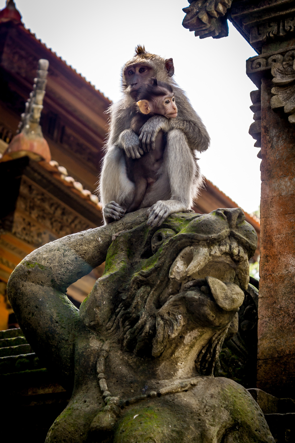 Monkey Forest | Bali, Indonesia