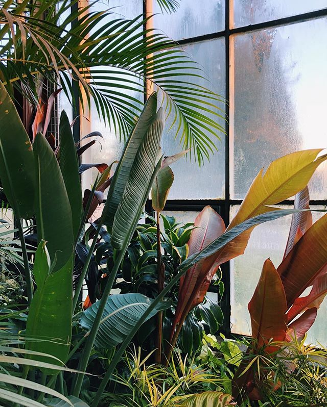 Something about these plant moments always make me happy 😊. Perhaps it's the color palette here or perhaps it's because I am always reminded of home while walking through the conservatory. . . #longwoodgardens #justgoshoot #plantlife #exploremore #neverstopexploring #liveauthentic #agameoftones #vscocam #plantsmakepeoplehappy #ihavethisthingwithwindows #mytinyatlas