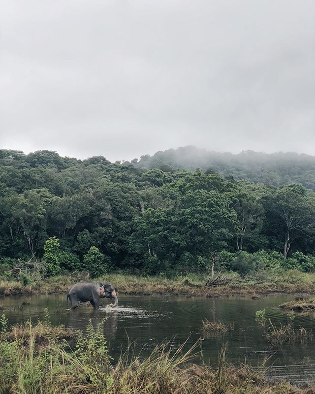 In Sri Lanka look out for wild 🐘 instead of deer on the roads. . . #srilanka #sridriptrip #letsgosomewhere #wildelephant #mytinyatlas #lifewelltravelled #neverstopexploring #liveauthentic