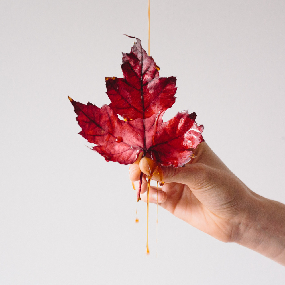 Maple (syrup) Leaf