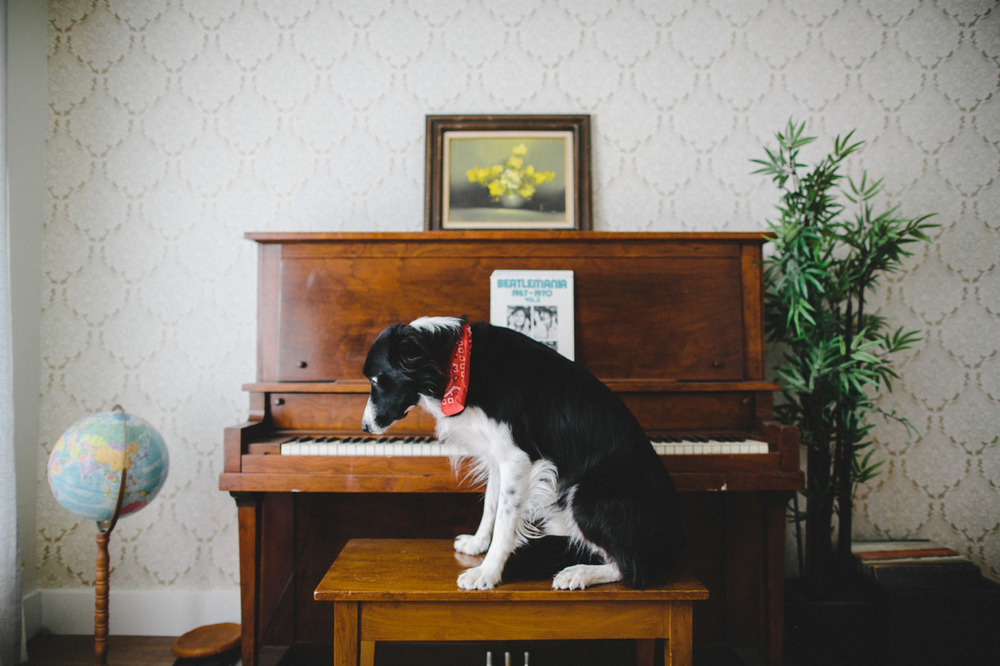 Most dogs can't play the piano. Momo can't play the piano.