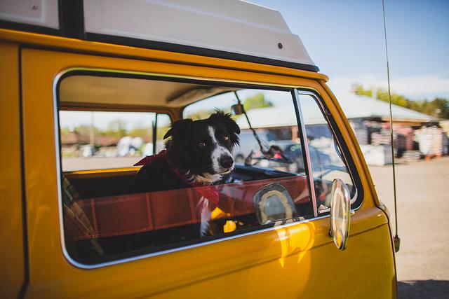 Momo + Van on Flickr.