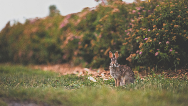 Peter Rabbit  on Flickr.
