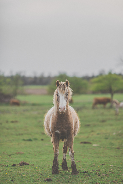 Horse  on Flickr.