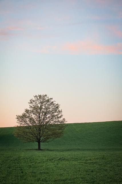 Tree on Flickr.