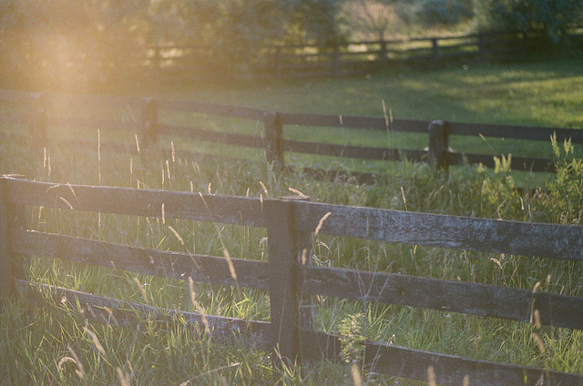 Fence on Flickr. I got some film developed, I got it back today.