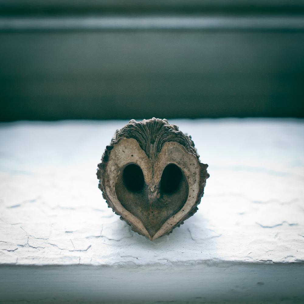 Love is an owl.