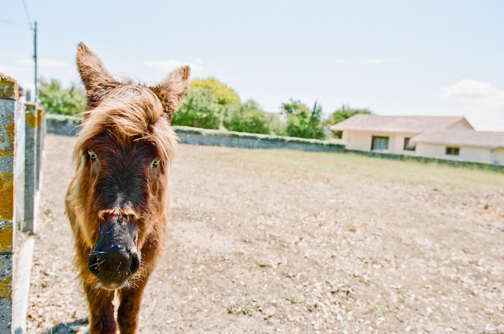 Hey look, a mule. -Zach EOS 3 24mm 1.4L II
