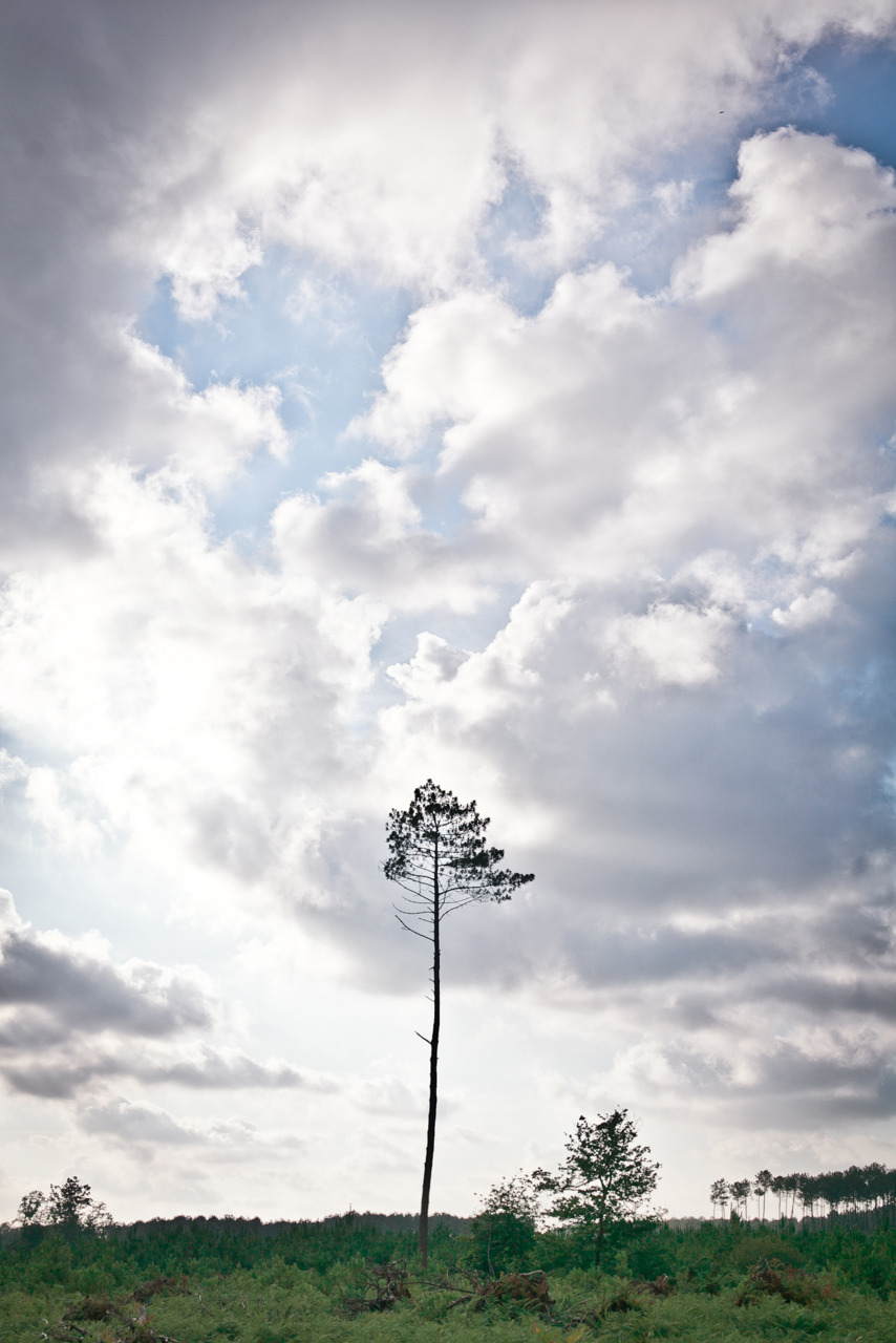 some tree -Zach EOS 5D mark II Sigma 50mm 1.4