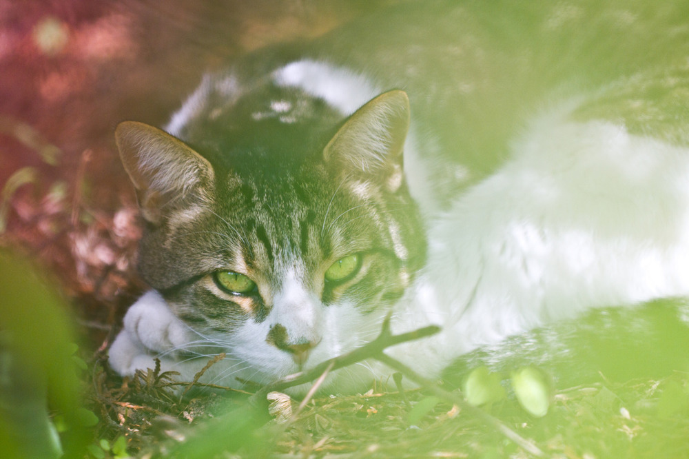 there was this cat in my backyard yesterday -zach EOS 7D 70-200mm 2.8L IS II