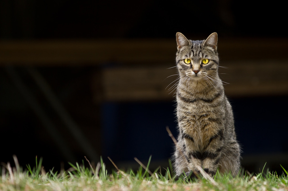 so when i was in Wasaga Beach for easter with my dad, I came across this cat, it was sweet pretty majestic and junk…  -zach EOS 7D 70-200mm 2.8L IS II