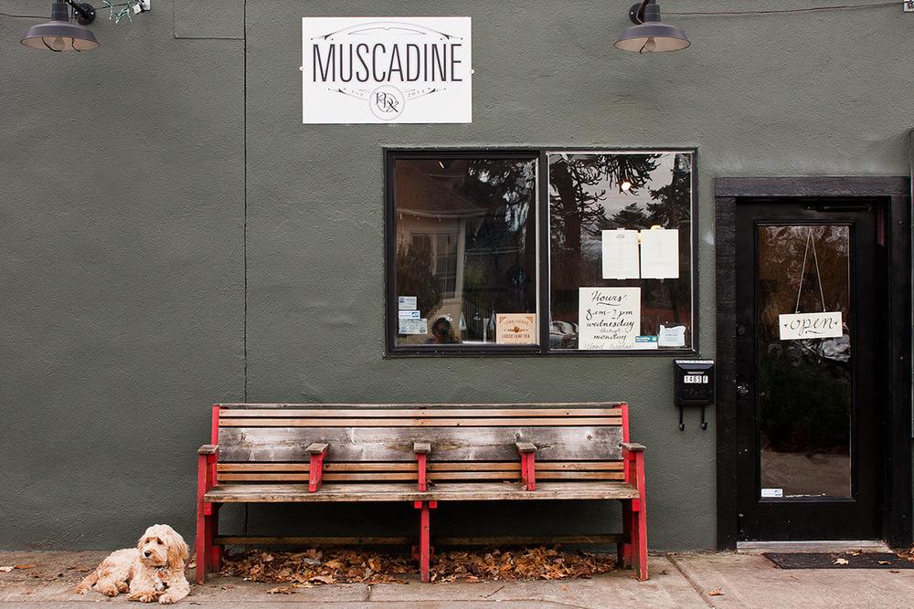 muscadine_11.jpg