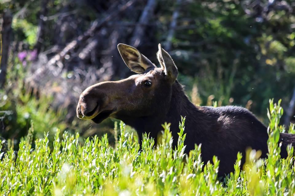 moosee.jpg