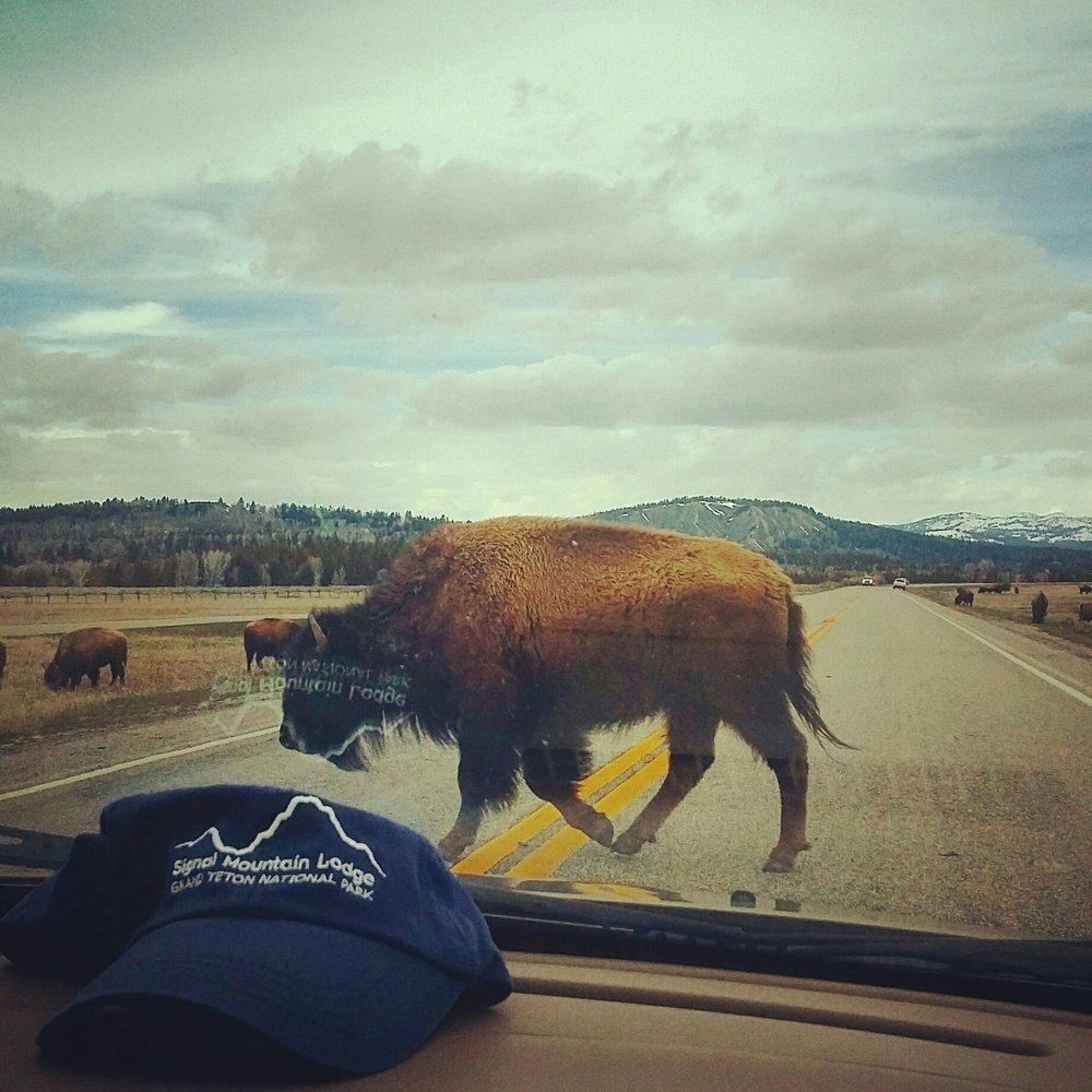 bison hat.jpg