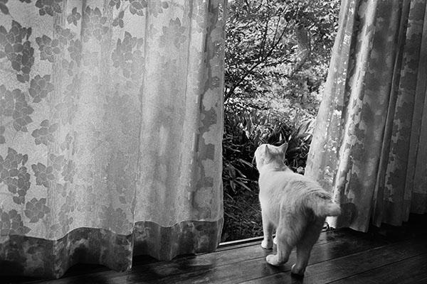 FUKUMARU Step by Step ©Miyoko Ihara ©Libro Arte.,Inc
