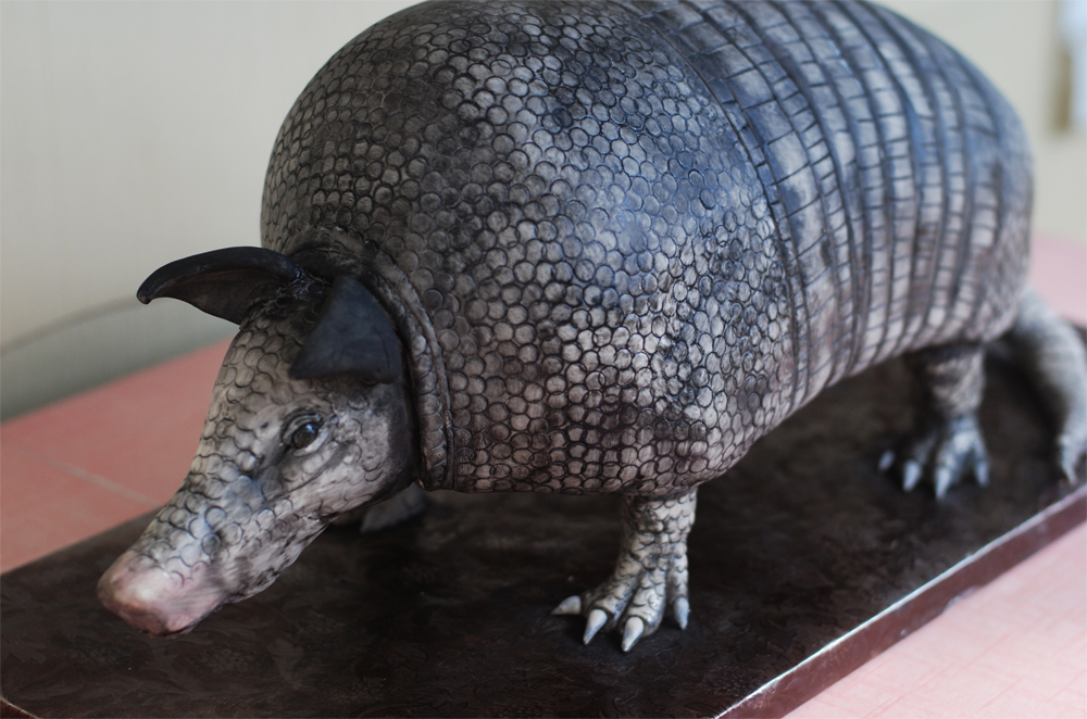 Sculpted Armadillo Cake